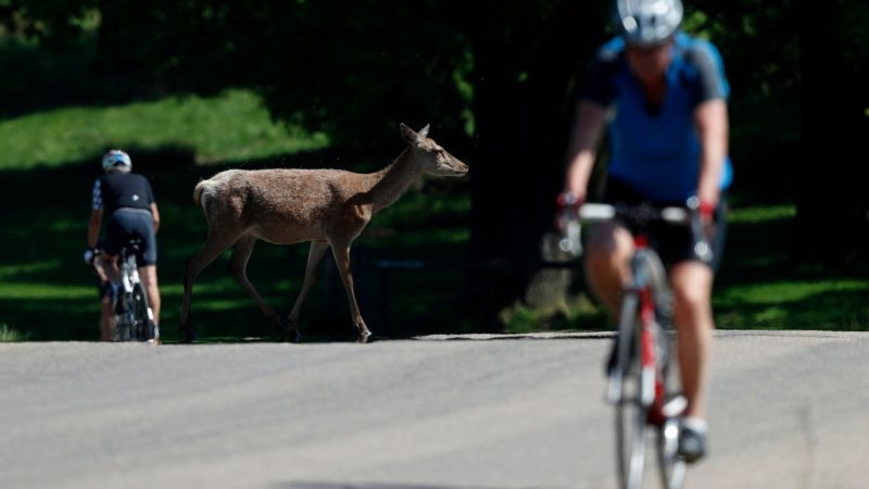 Richmond Park to start 'managed re-introduction' of cyclists in June