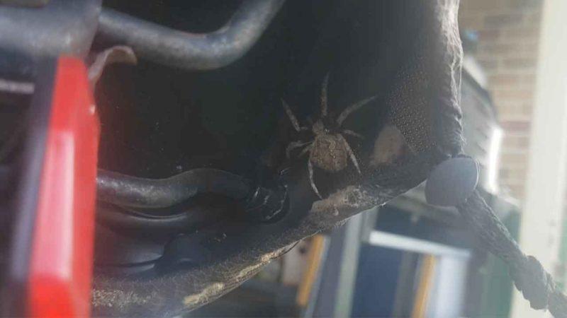 Australian Man Finds Spider Crawling Under His Bike Seat