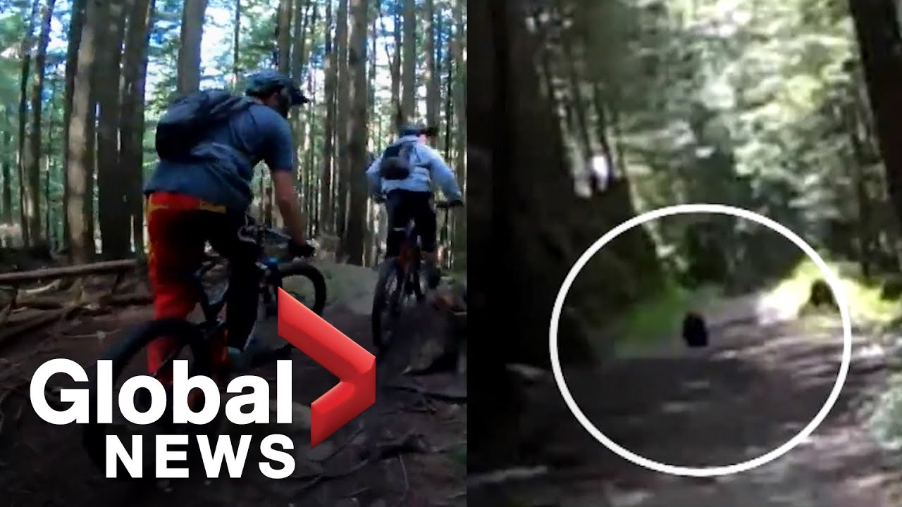 Video shows black bear chasing B.C. mountain bikers down trail