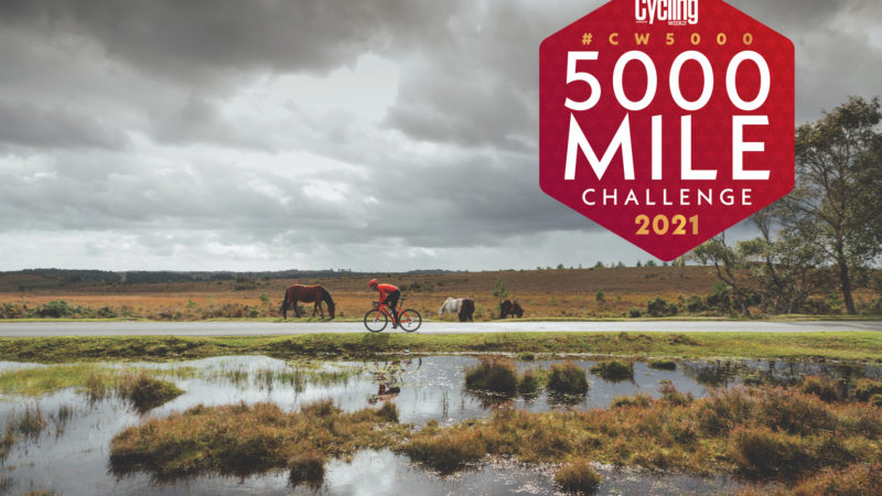 Meilleures attractions de la CW5000 – La forêt des merveilles