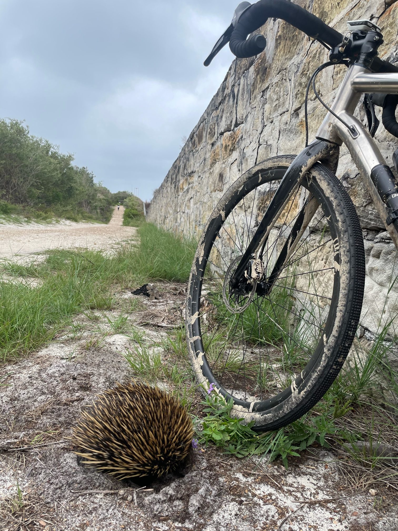 Bikerumor Pic Of The Day: Manly, Australië
