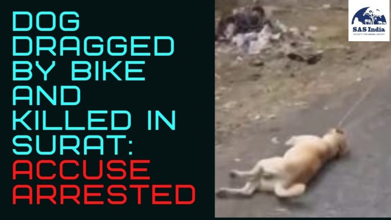 Dog dragged by bike and killed in Surat | Accuse Arrested | SAS India