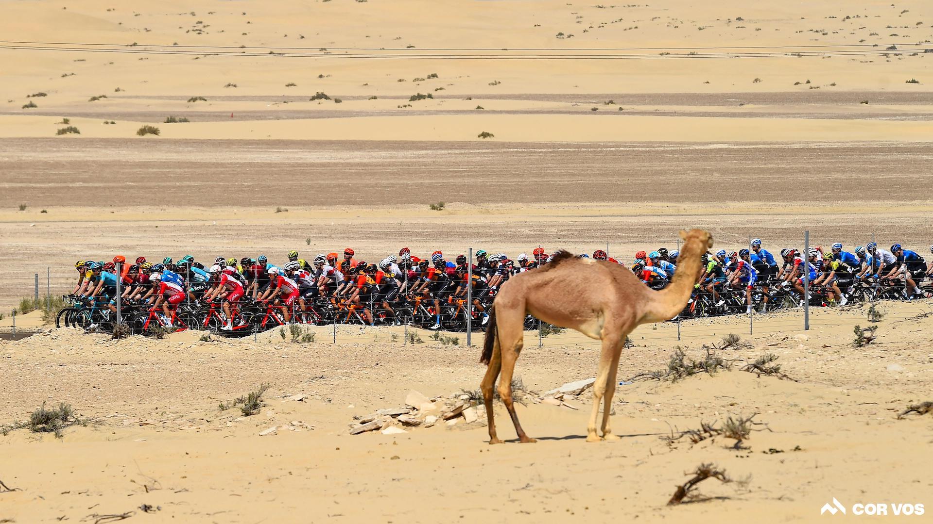 Oui, vous devriez regarder le UAE Tour cette année
