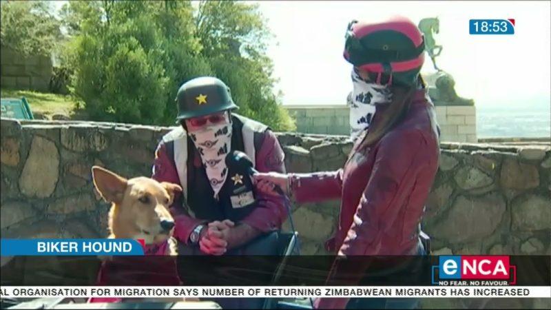 Biker hound | It's a dog's life