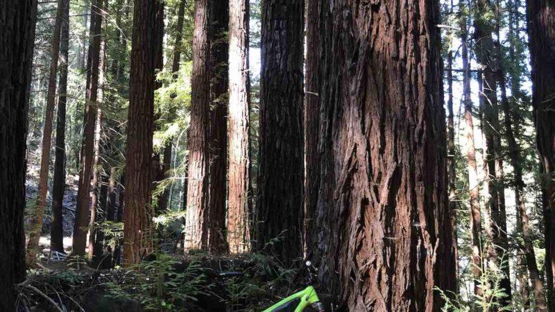 Foto del día de Bikerumor: Bosque estatal de demostración de Soquel, California