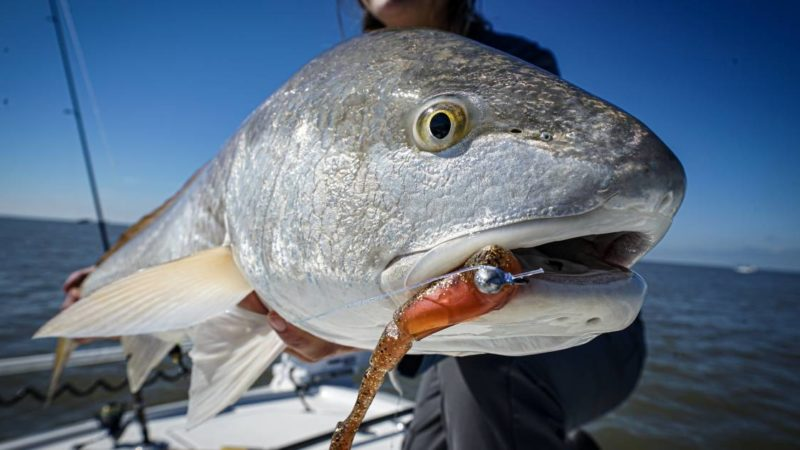 Meet the Redfish: How and Where to Catch a Red Drum