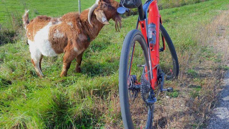 Päivän bikerumor-kuva: ystävystyminen Thorin kanssa – Lodi, Wisconsin